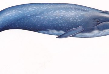 Blue Whale: Troppa psicosi?